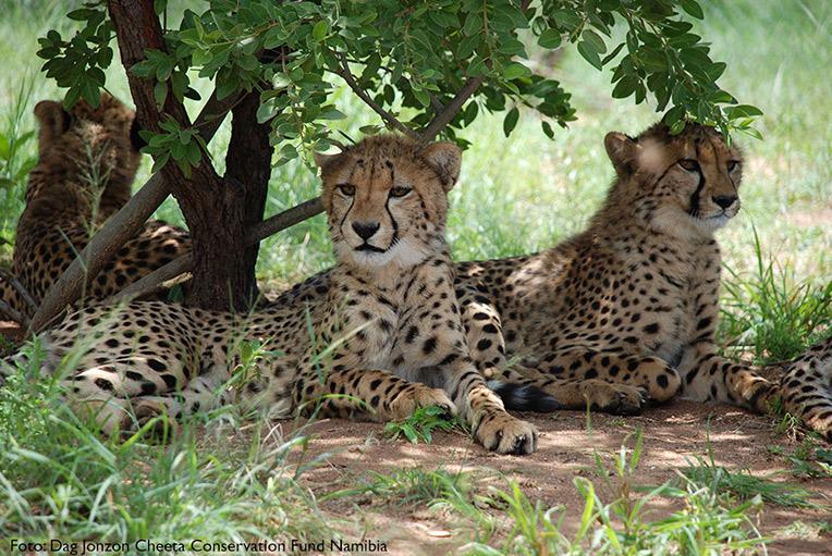 Tre av Görans ungar